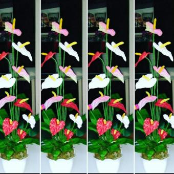 Saksı Çiçek Antoryum
