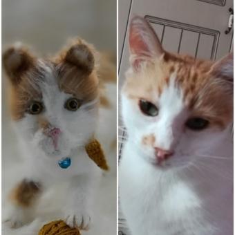 Amigurumi Kişisel Kedi